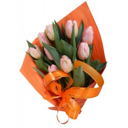 Tulipany 9 szt....